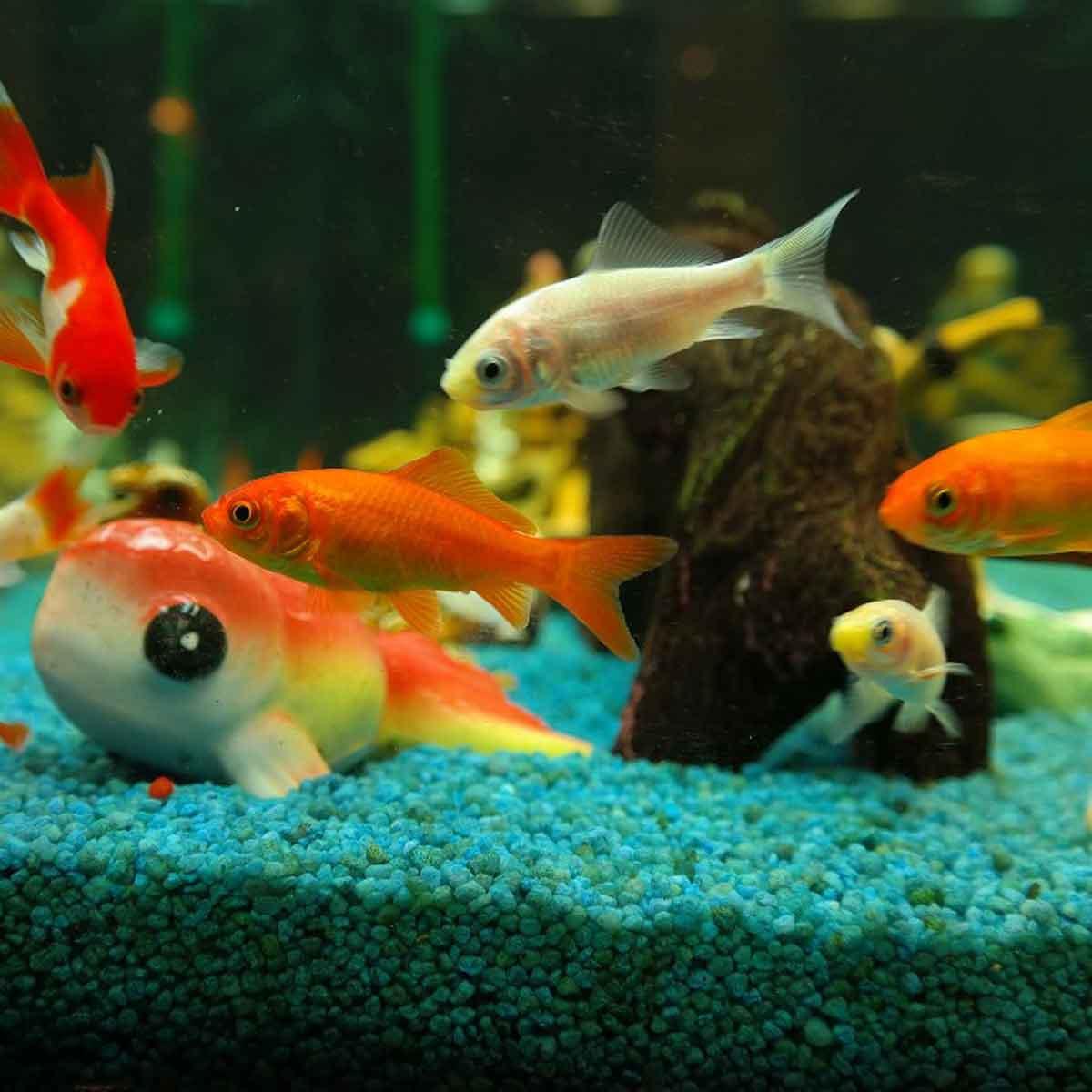 Decalogo per l'acquisto del primo acquario