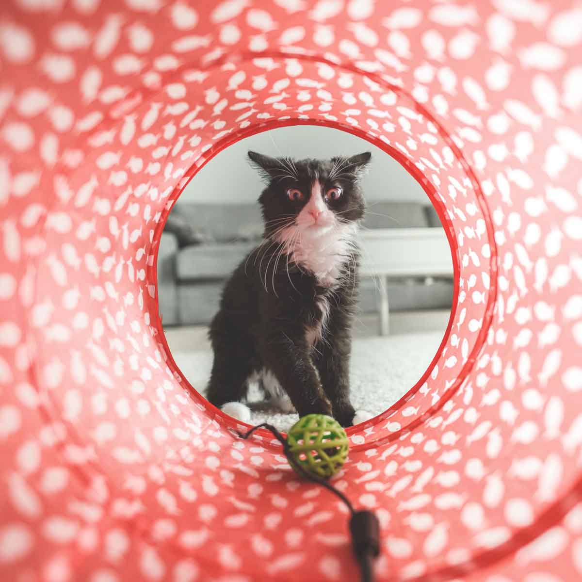 Gatti e giochi: un binomio indispensabile