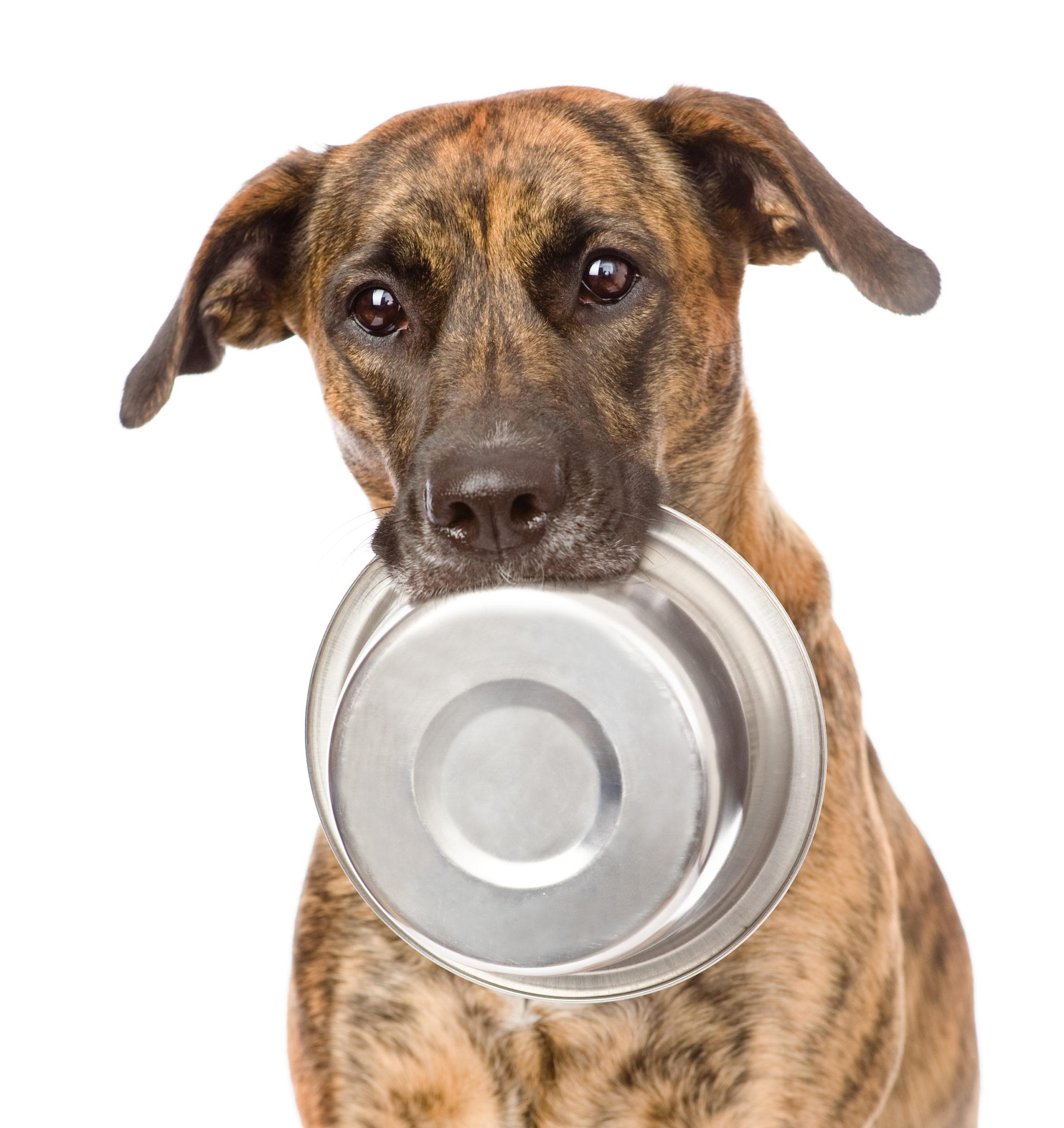 Prima mangio io e poi il cane