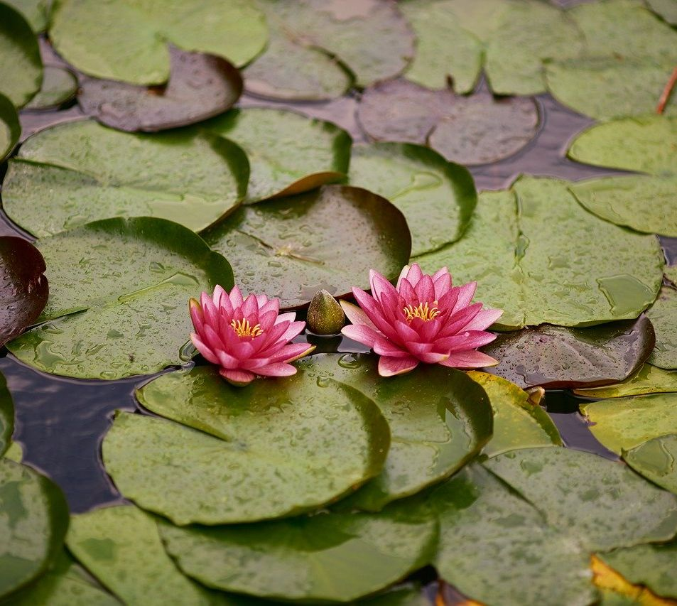 Come creare un laghetto nel tuo giardino