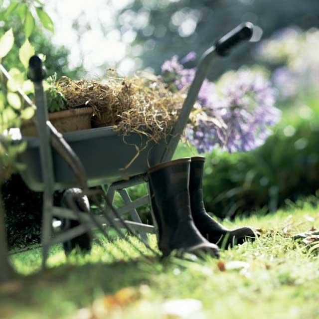 Guida alla scelta delle piante da giardino