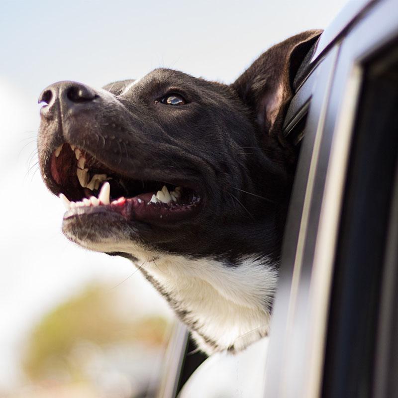 Il cane e la legge: le norme fondamentali