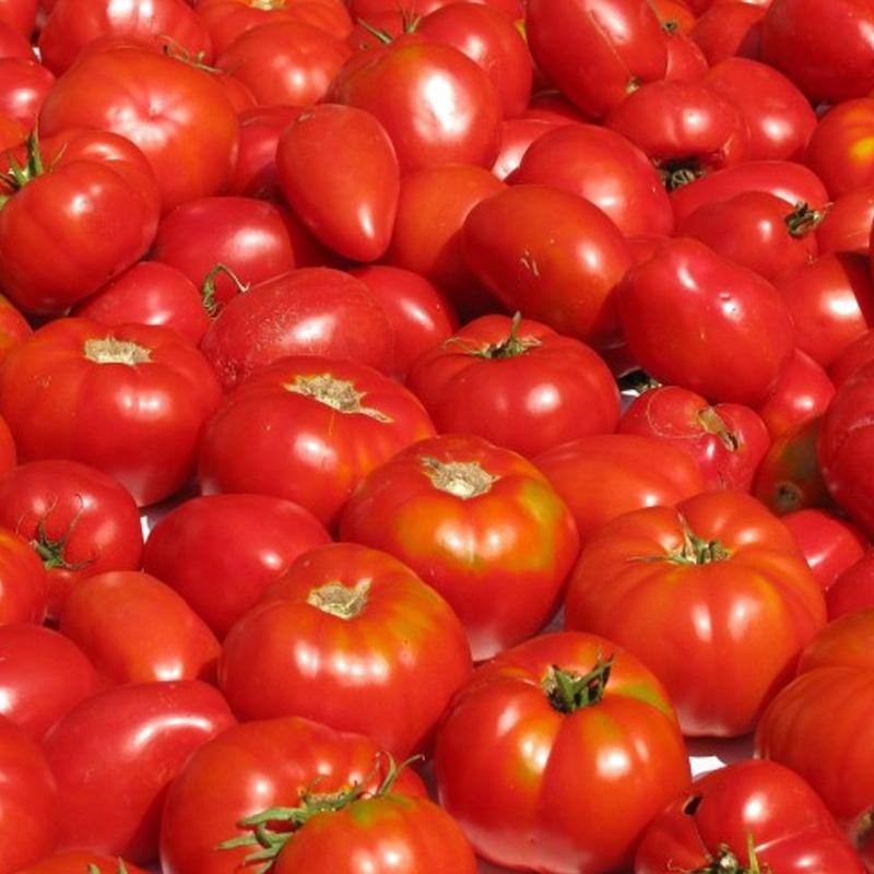 La coltivazione del pomodoro