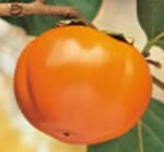 kako mela impollinatore