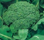 cavolo broccolo invernale fiesta
