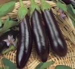 melanzana lunga nera miranda