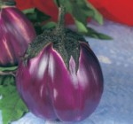 melanzana tonda violetta beatrice