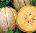 melone retato calibro
