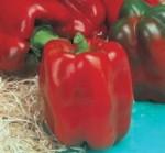 peperone rosso linares