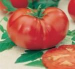 pomodoro costoluto marmande dural