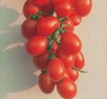 pomodoro vesuviano piccadilly