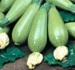 zucchino bolognese giambo