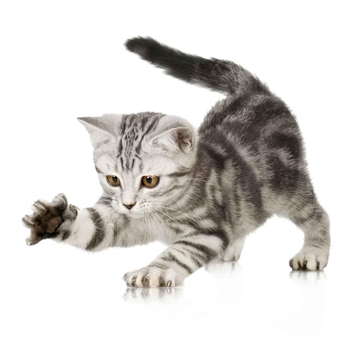 Attenzione al graffio del gatto