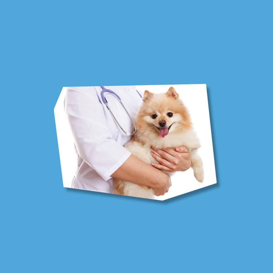 Alimenti dietetici per cani e gatti