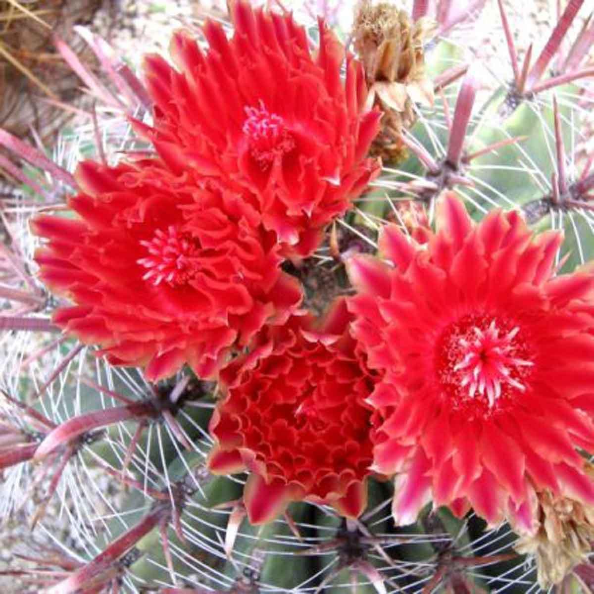 Cactacee e succulente in varietà