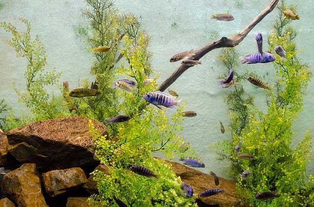 Le alghe dell'acquario, importanti o fastidiose?