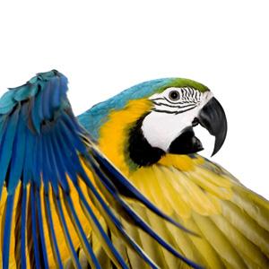 Acquisto, scelta e sistemazione di un nuovo pappagallo