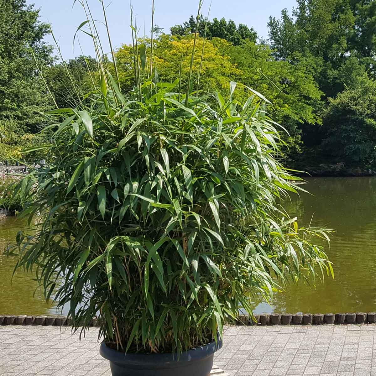 Barriere naturali – distanziamento con il Bambù