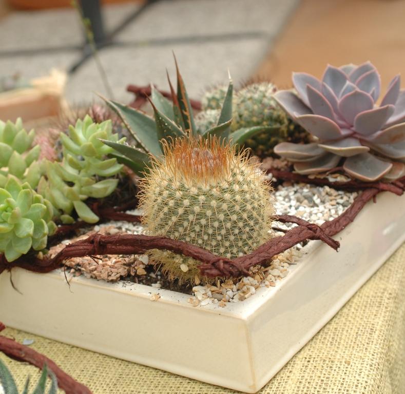 Cure invernali per le piante grasse