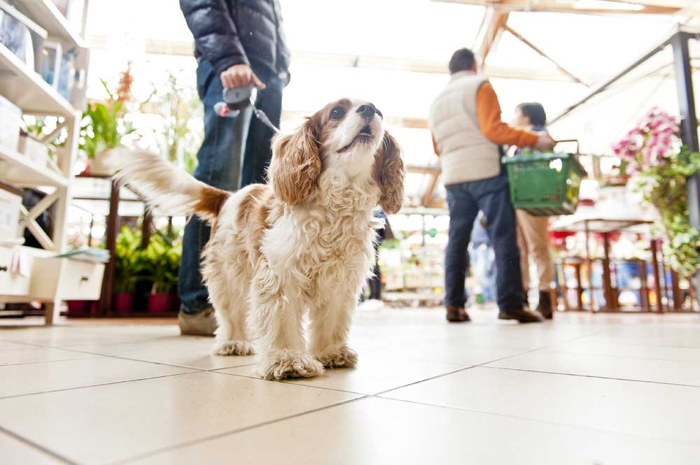 Cani e bambini: prevenire l'aggressività