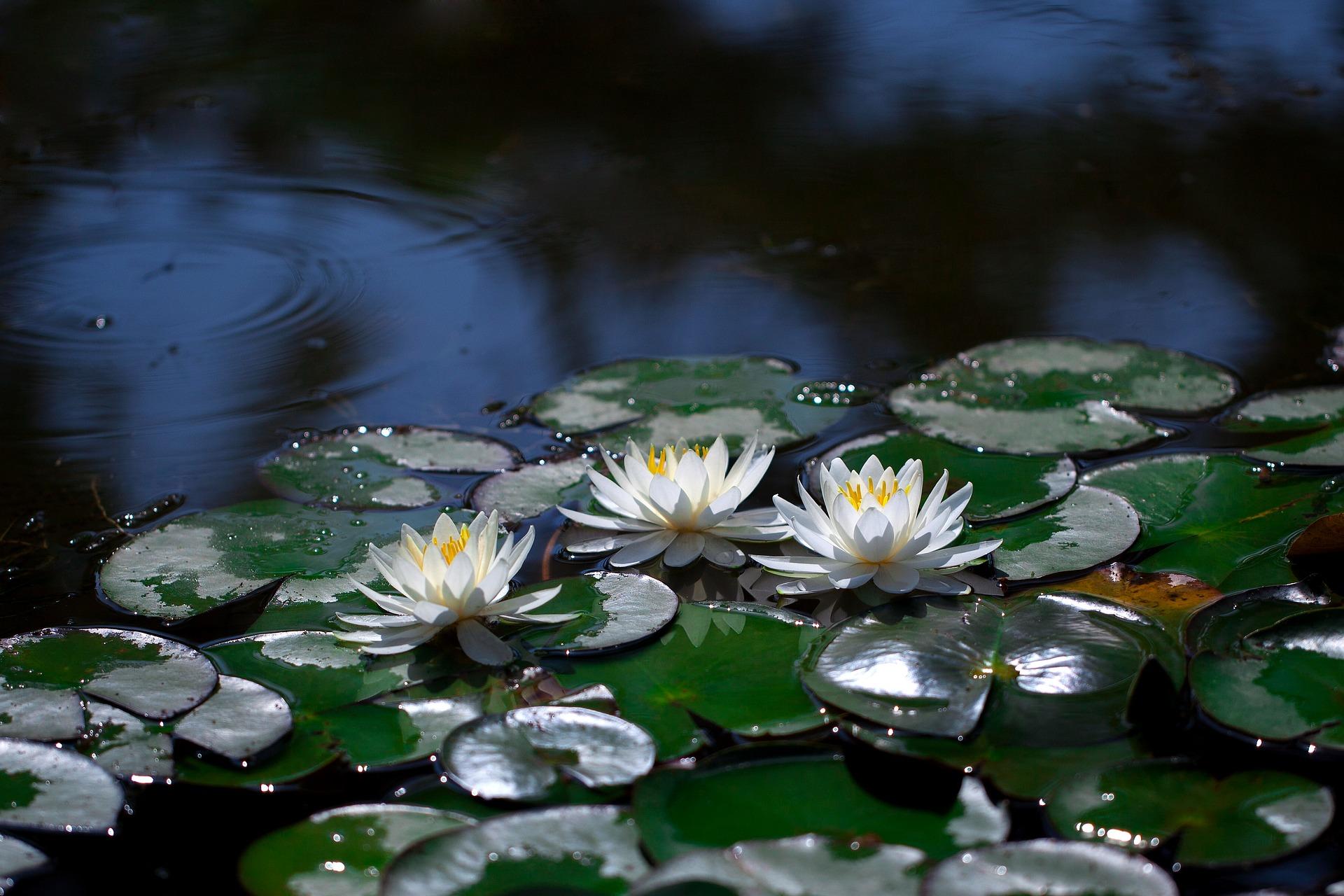 Il laghetto, un mondo sommerso in giardino