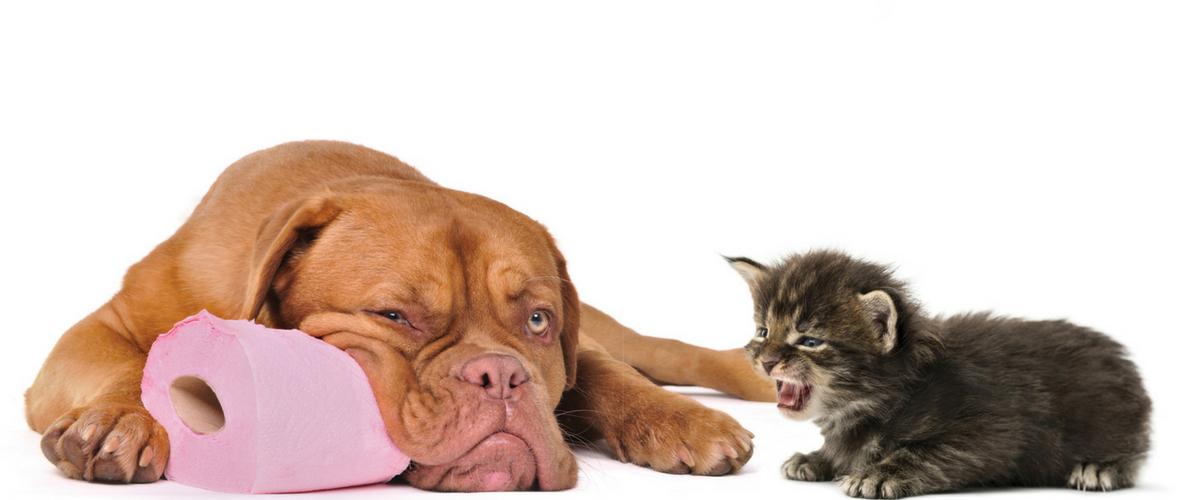 Comfort e igiene con i nostri amici cani e gatti