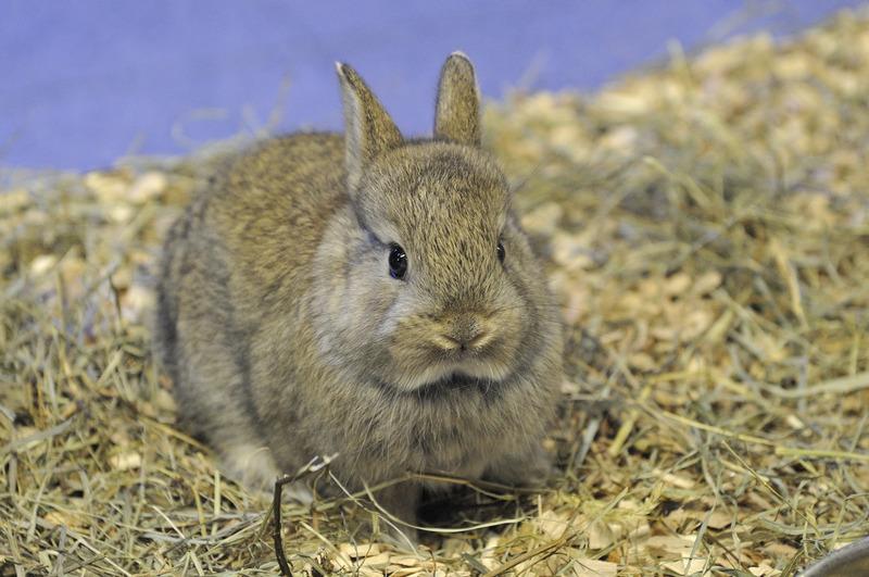 I segni di stress nel coniglio