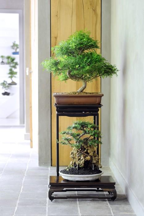 La giusta collocazione per i bonsai