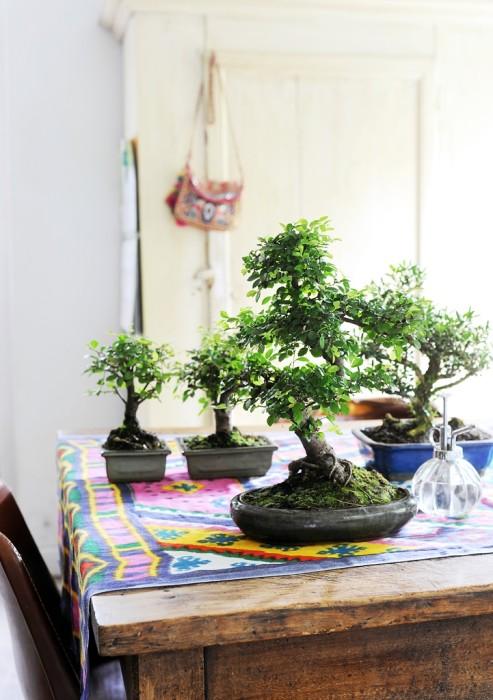 Rinvaso di un bonsai