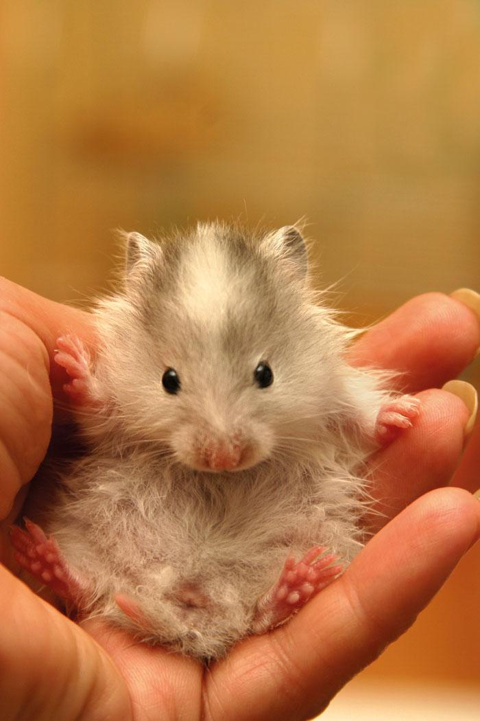 Come prendersi cura dei piccoli roditori e del coniglio nano