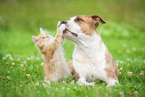 Il diabete del cane e del gatto