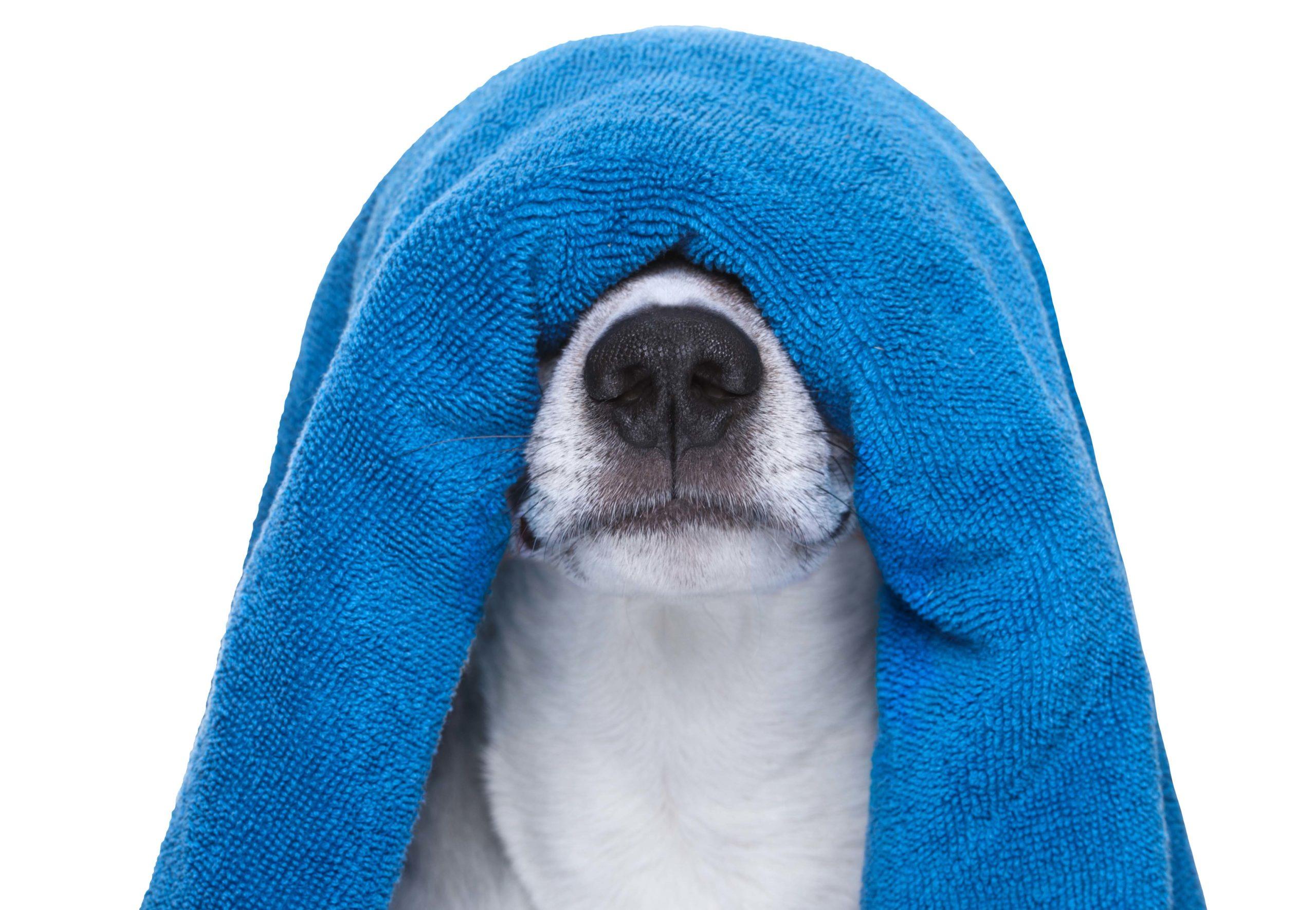 La corretta igiene del cane