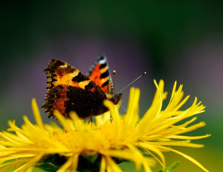 Accogliere gli insetti amici della natura