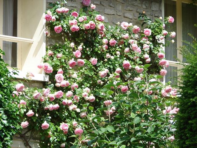 Fiori e foglie in verticale in terrazzo e giardino