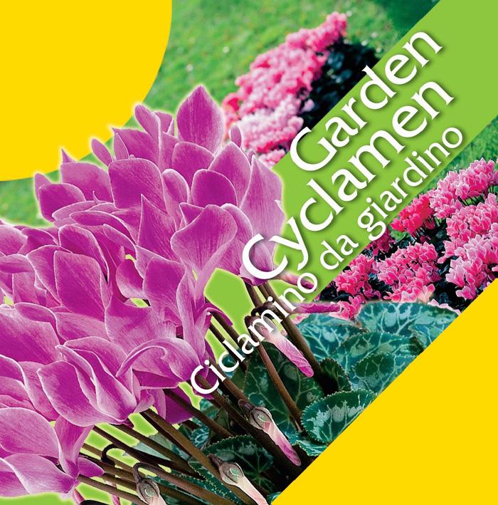 Ciclamino Garden Cyclamen