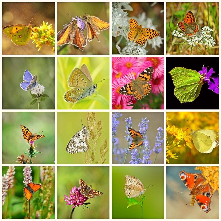 Giardino e terrazzo per le farfalle