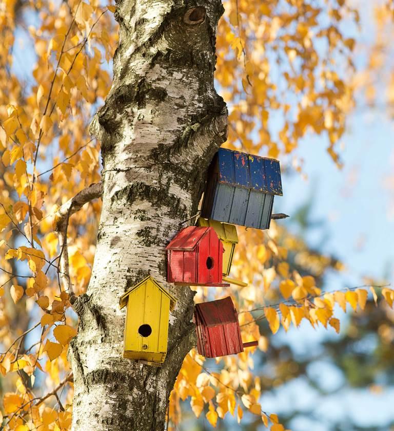 La casetta nido per gli uccelli