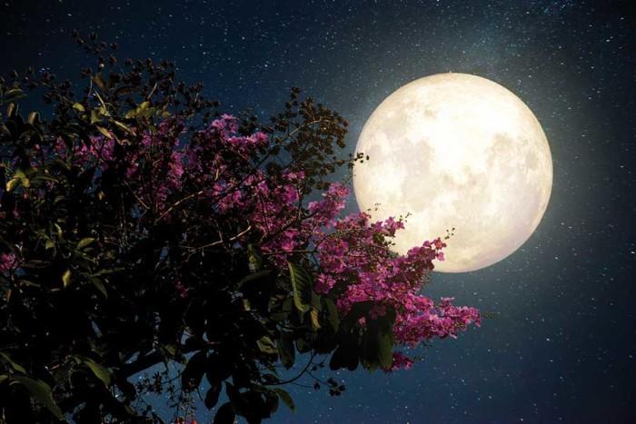 Luna aiutami tu, nell'orto, in giardino e in casa
