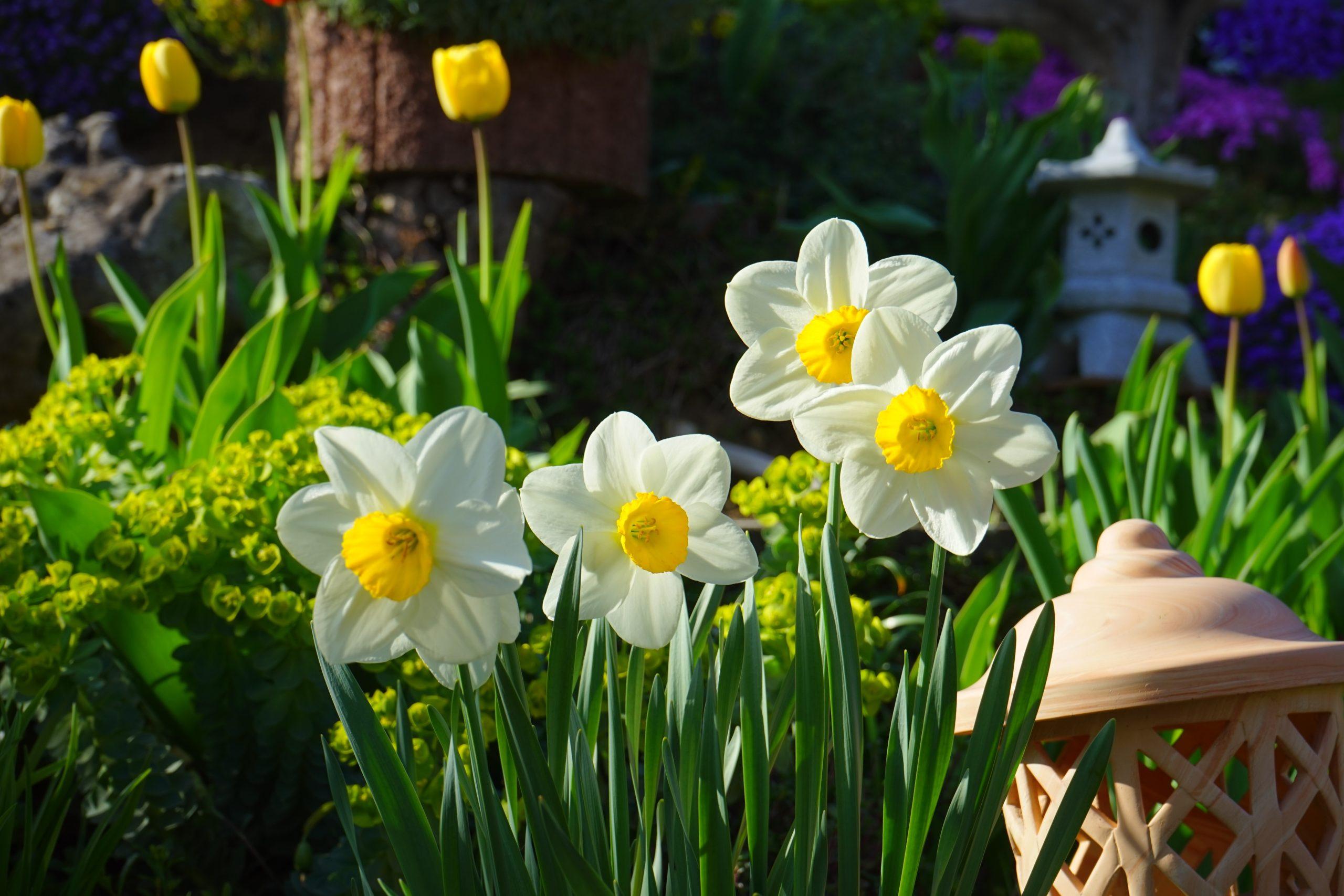 Aspettare la primavera con i bulbi