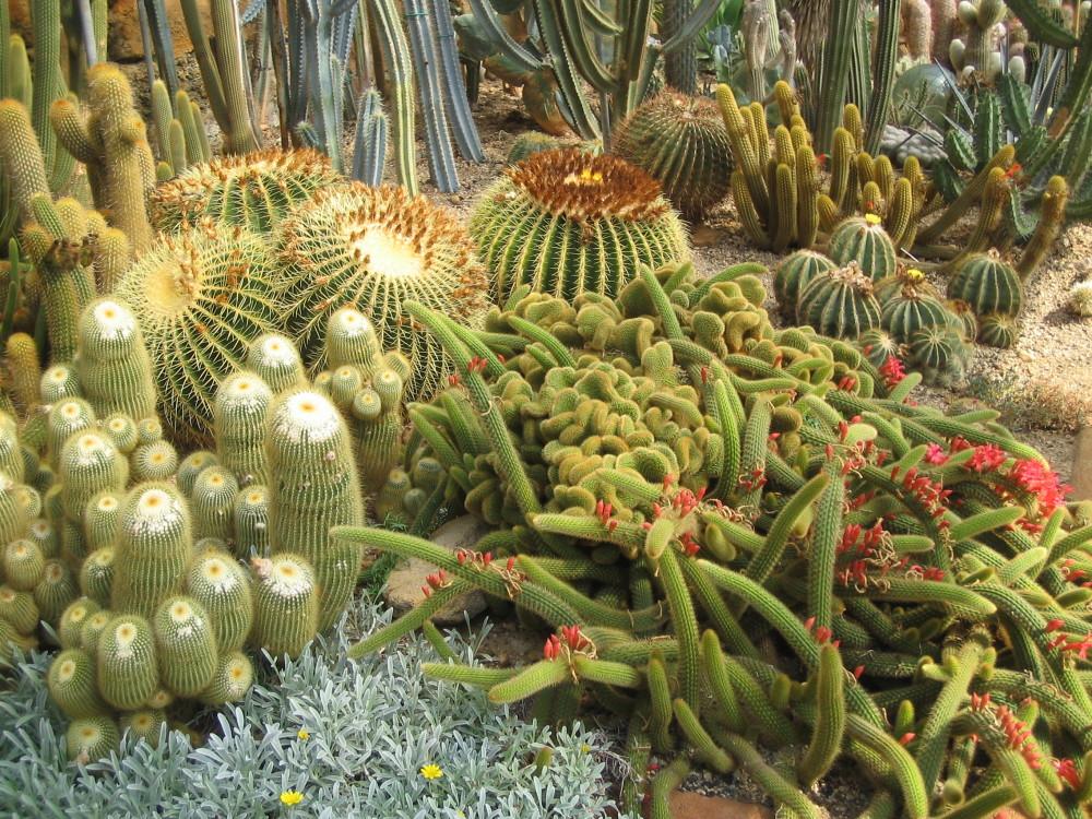 Dry gardening, le piante che non hanno sete