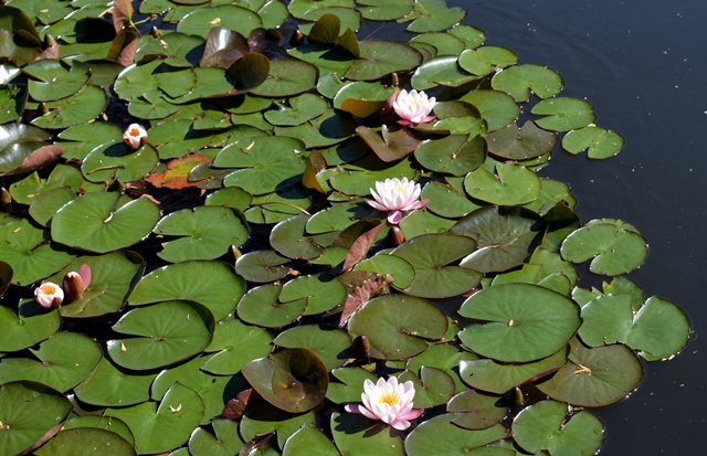 Perchè un laghetto nel tuo giardino