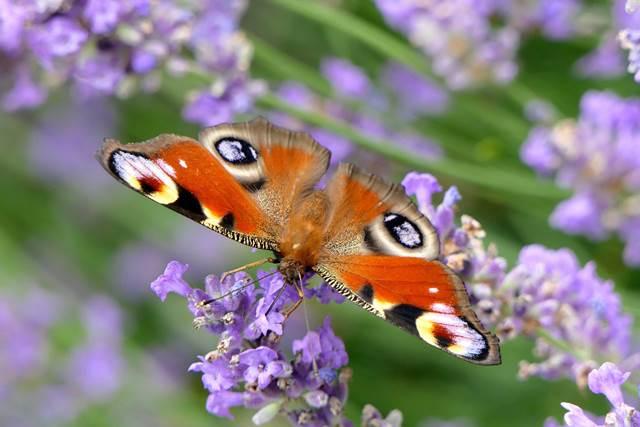 Più biodiversità in giardino uguale meno parassiti