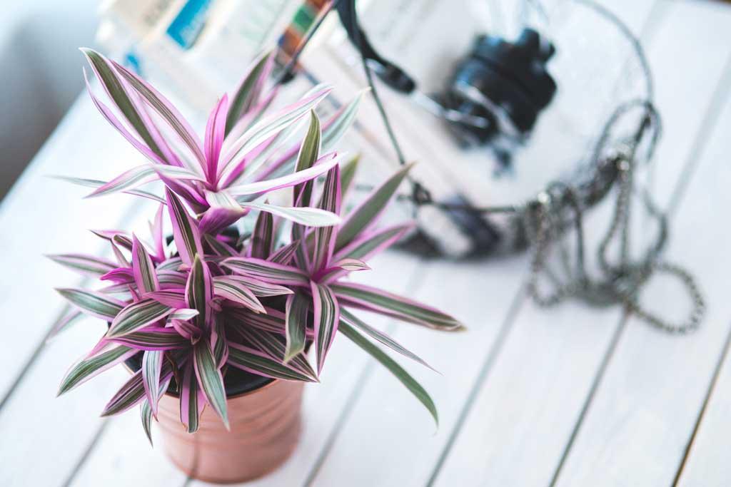 Piante da interno: sette consigli utili