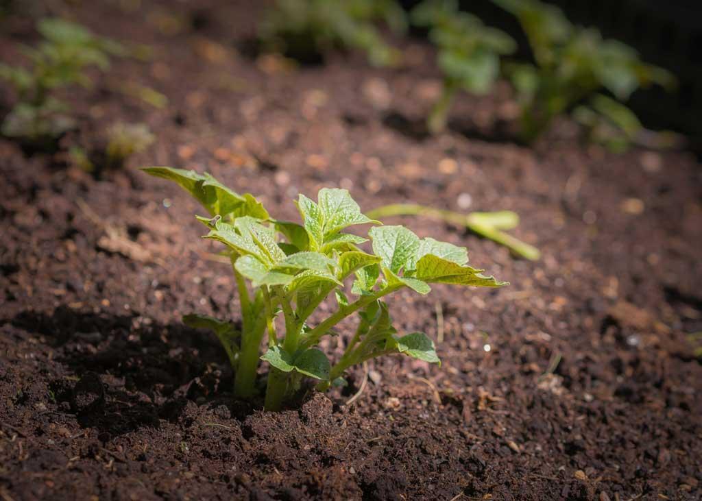 Preparare l'orto in primavera
