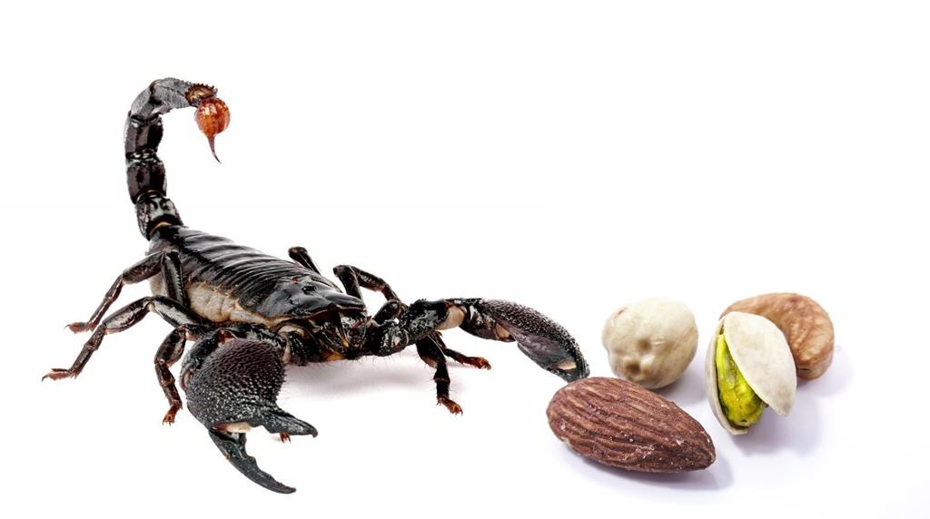 Gli scorpioni, inconsueti animali di compagnia