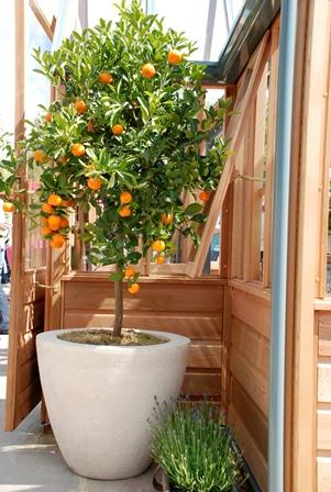 """Il frutteto """"mini"""" in vaso e in giardino"""
