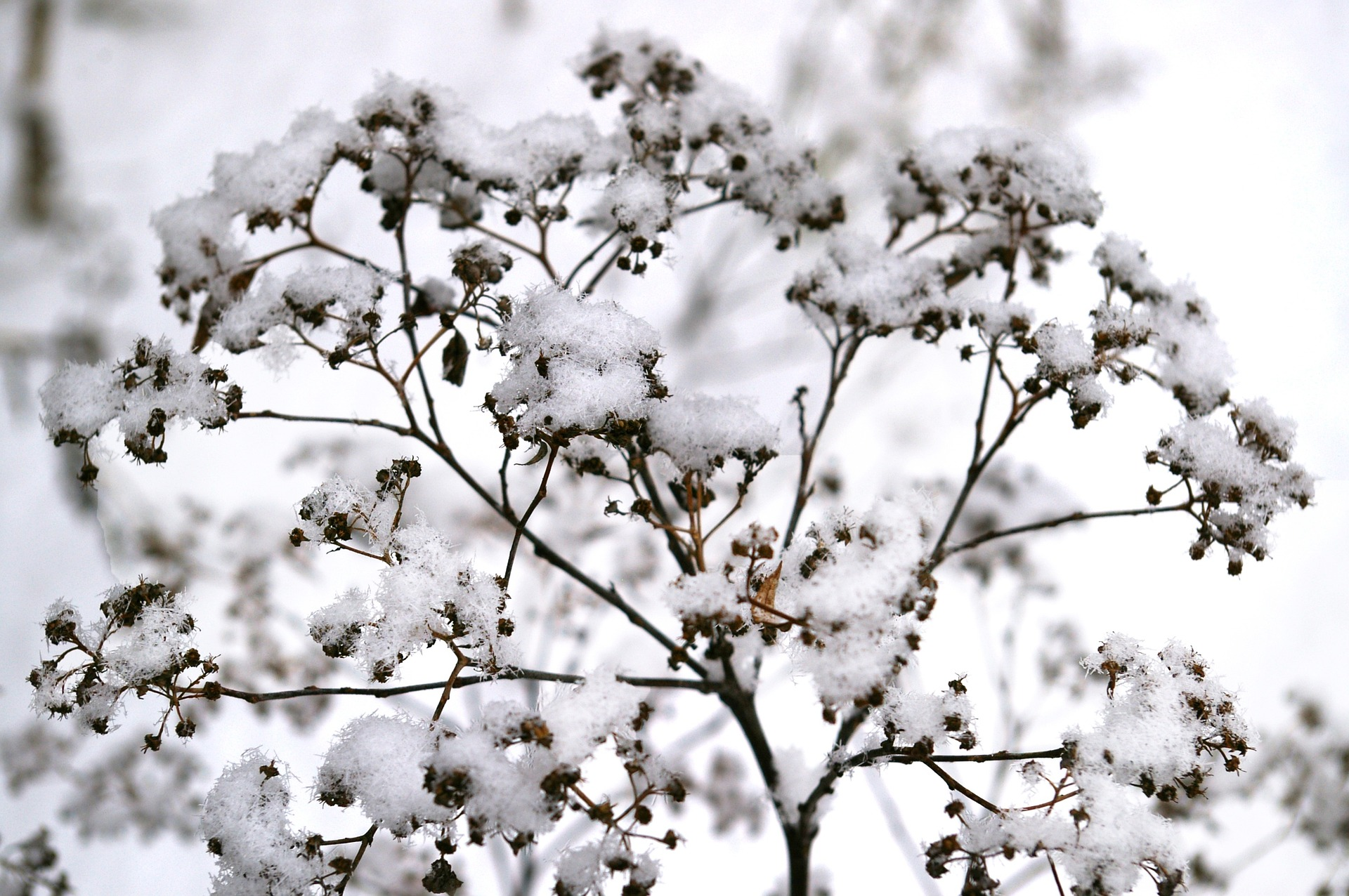 Come proteggere le piante durante l'inverno