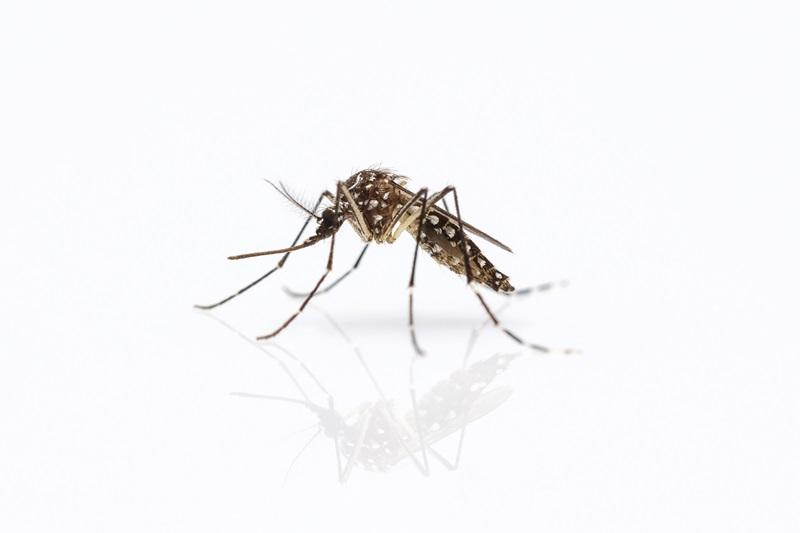 Zanzare: programma di difesa