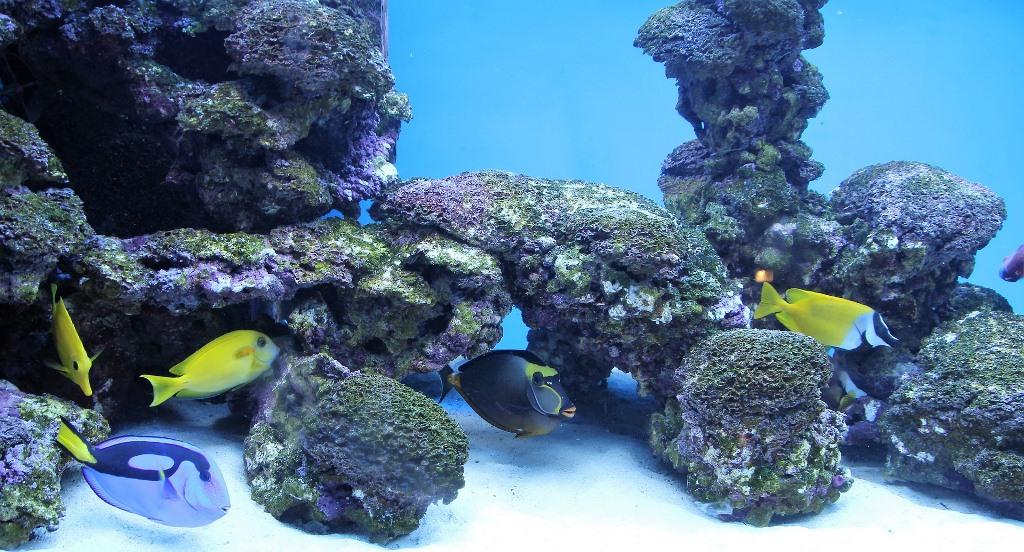 L'acidità dell'acqua dell'acquario