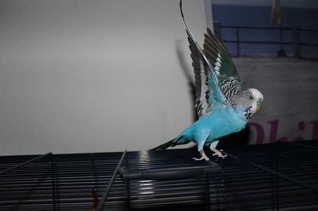 Avvelenamento da zinco negli uccelli da voliera